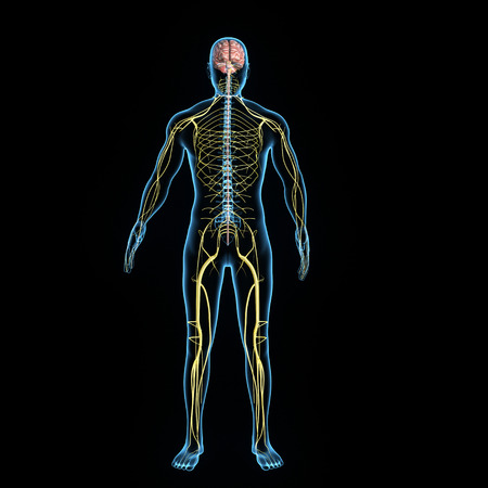 system: Układ nerwowy