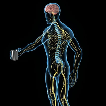 Sistema Nervoso Archivio Fotografico - 33607817