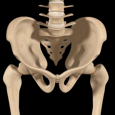 pelvis: Pelvic hip Stock Photo