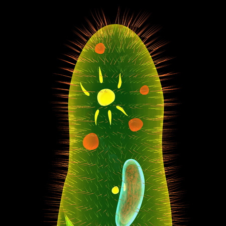 cilia: Paramecium