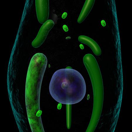 Euglena Stock Photo