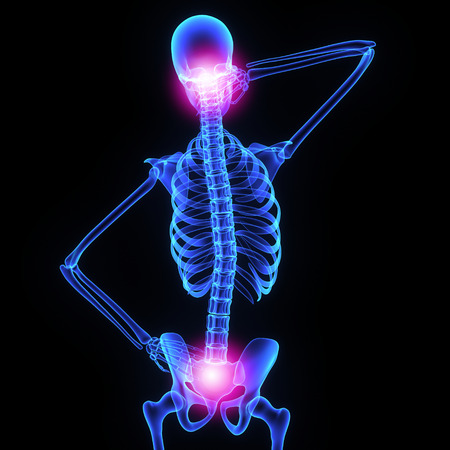 human spine: Neck and hip joint Stock Photo
