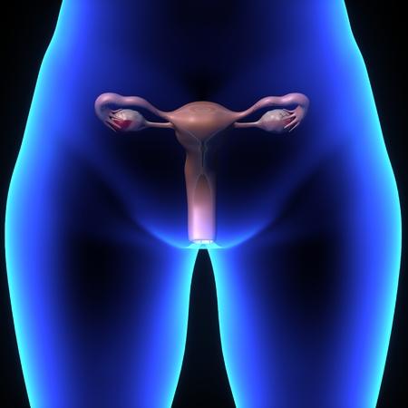female reproductive system: sistema reproductivo femenino