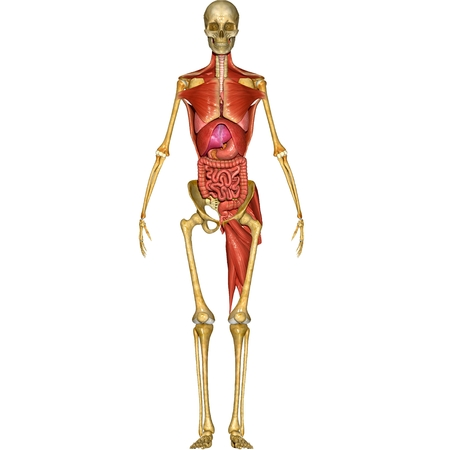 digestive: Digestive system