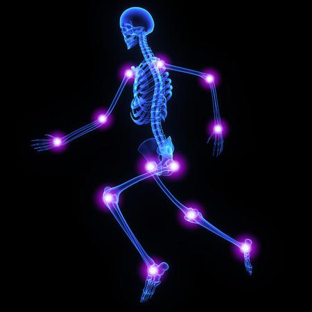 scheletro umano: Giunti