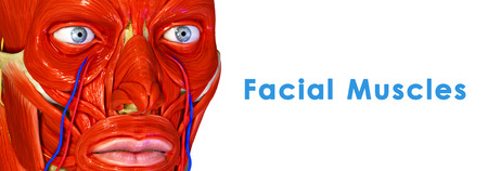 Facial Muscles photo