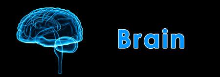 pons: Brain Stock Photo