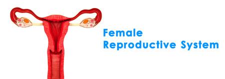 contraceptive: Intrauterine Copper Contraceptive