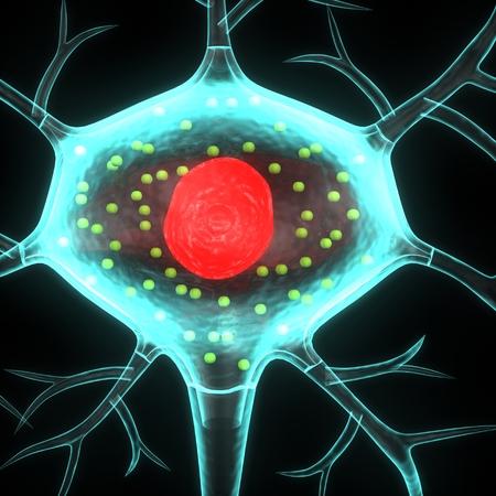 human nervous system: Neuron
