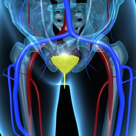 tumor stage: Urinary bladder