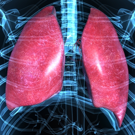 Lungs photo