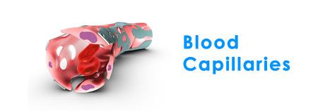 lymphatic vessel: Blood Capillaries Stock Photo
