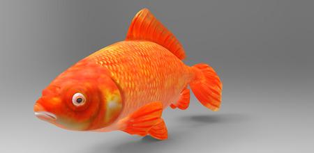 frozen fish: Fish Stock Photo