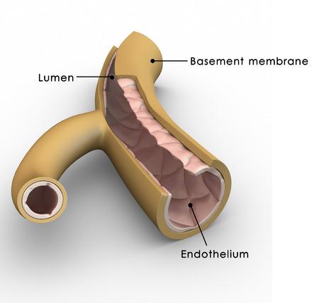 모세 혈관