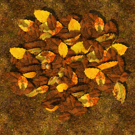 decomposed: Decomposed leaves