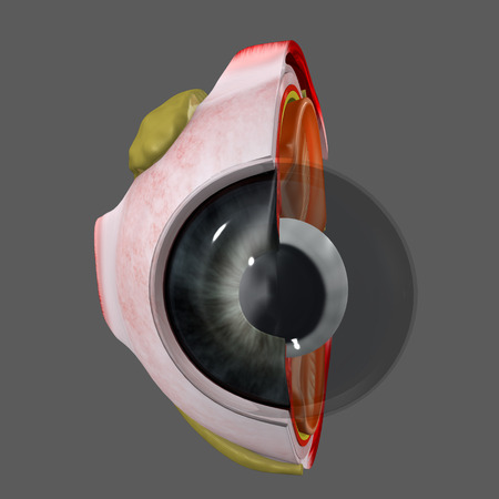 ojo humano: Ojo Humano