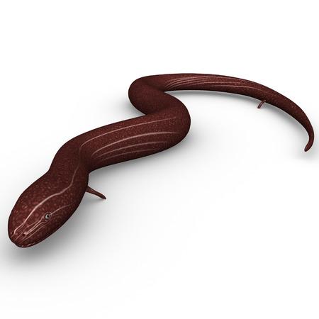 eel: Congo Eel