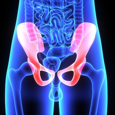 sacroiliac joint: Pelvic Hip