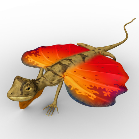 Flying Lizard photo