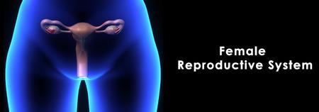 Système reproducteur féminin Banque d'images - 34590677