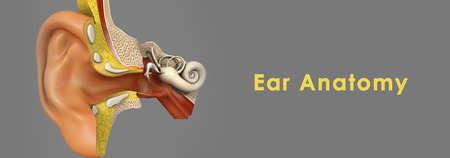 cochlear: Ear Anatomy