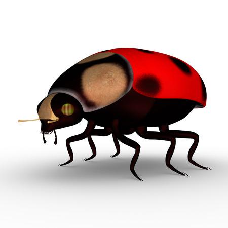 lady bug: Lady bug