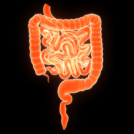 Small and large intestine Imagens