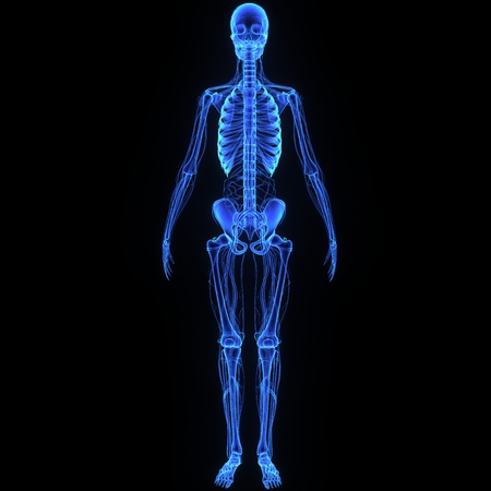 Skeleton with circulatory system Stock Photo