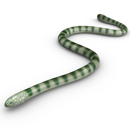 bellied: Hydrophis Stock Photo