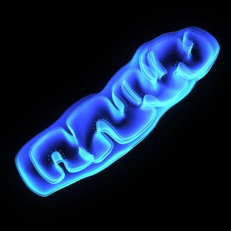 Les mitochondries Banque d'images