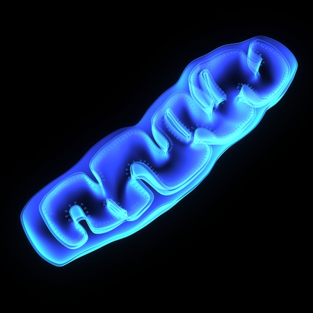 biology backgrounds: Mitochondria Stock Photo