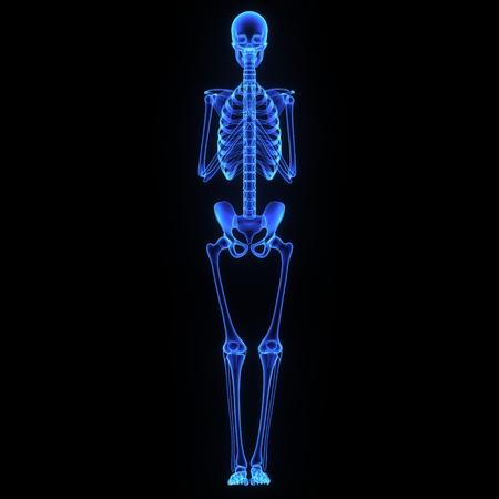 esqueleto humano: Articulaciones
