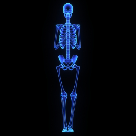 anatomy leg: Joints
