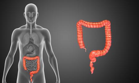 anal: Large intestine