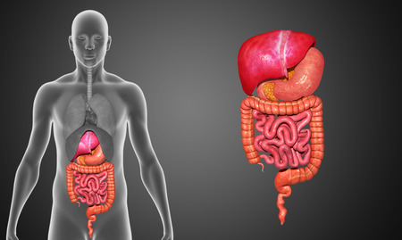 bowel disease: Digestive system