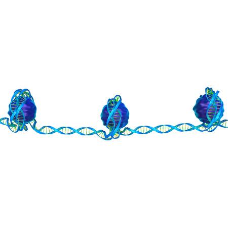 nucleotide: Nucleosome
