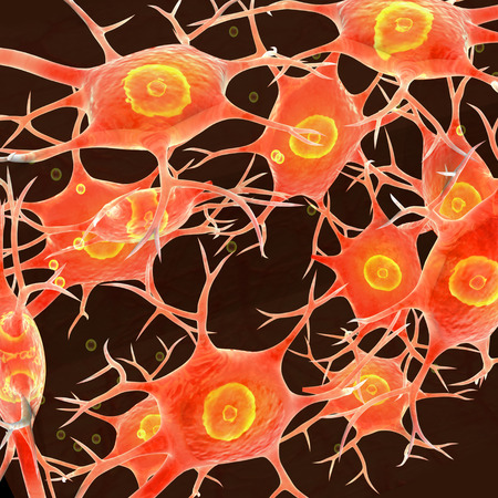 neural: Neural Tissue Stock Photo