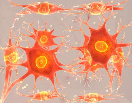 cellule nervose: Tessuto neurale