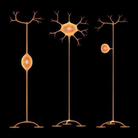 dendrite: Neurons Stock Photo