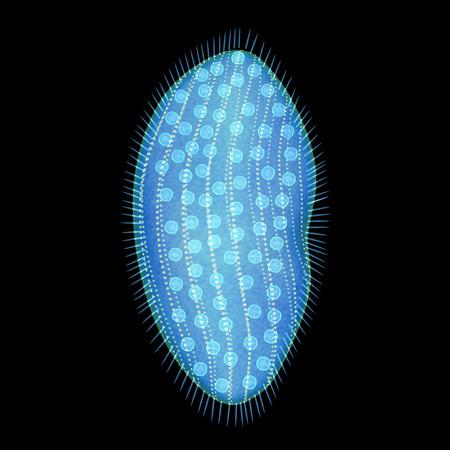 microscopical: Opalina Stock Photo