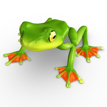 treefrog: Flyng frog