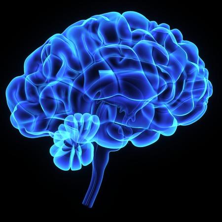 Brain Standard-Bild