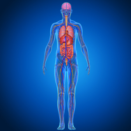 人間の解剖学
