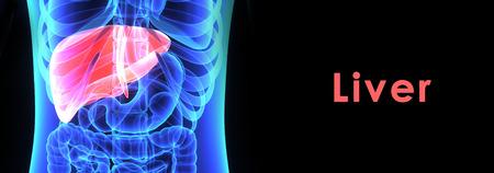 detoxification: Human Liver