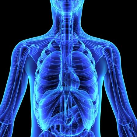 x xray: Human Anatomy