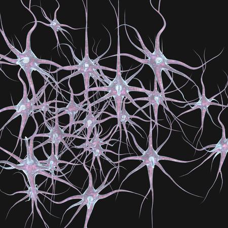 cellule nervose: Le cellule nervose