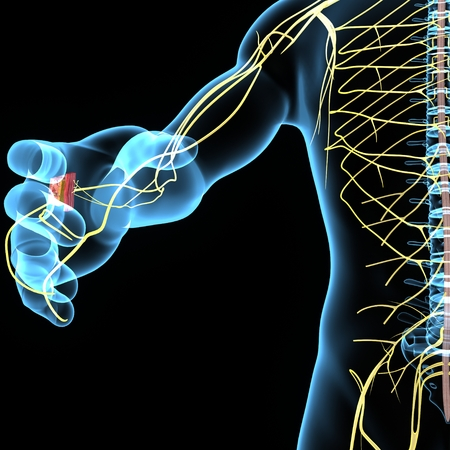 Système nerveux Banque d'images - 39657285