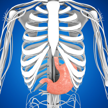 lung transplant: Stomach Stock Photo
