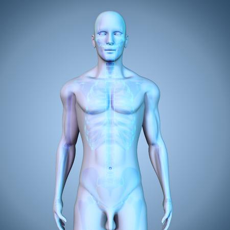 rheumatism: Human Skeleton