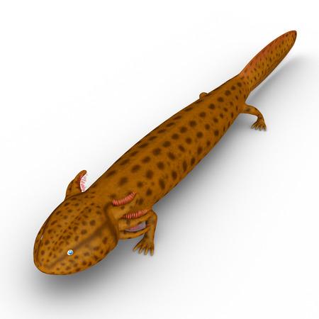 newt: Mudpuppy